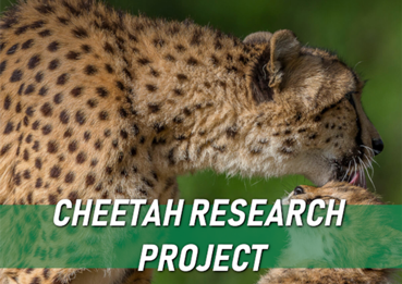 Cheetah-Research