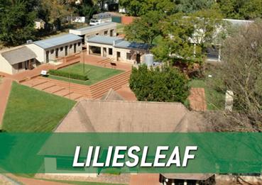 Lillies-leaf