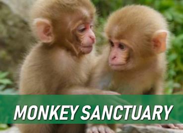 Monkey-Sanctury